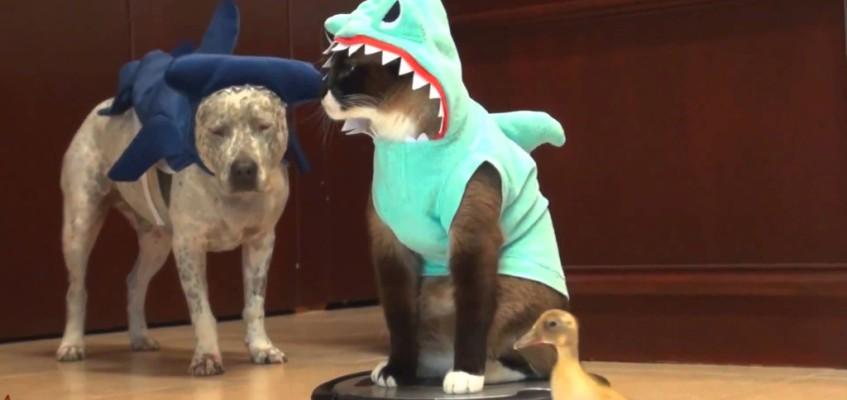 Muss leider sein: Katzenvideo